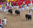 bohemiantours_bull run